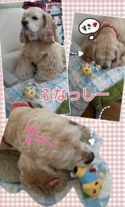 2014-01-29_142108.jpg
